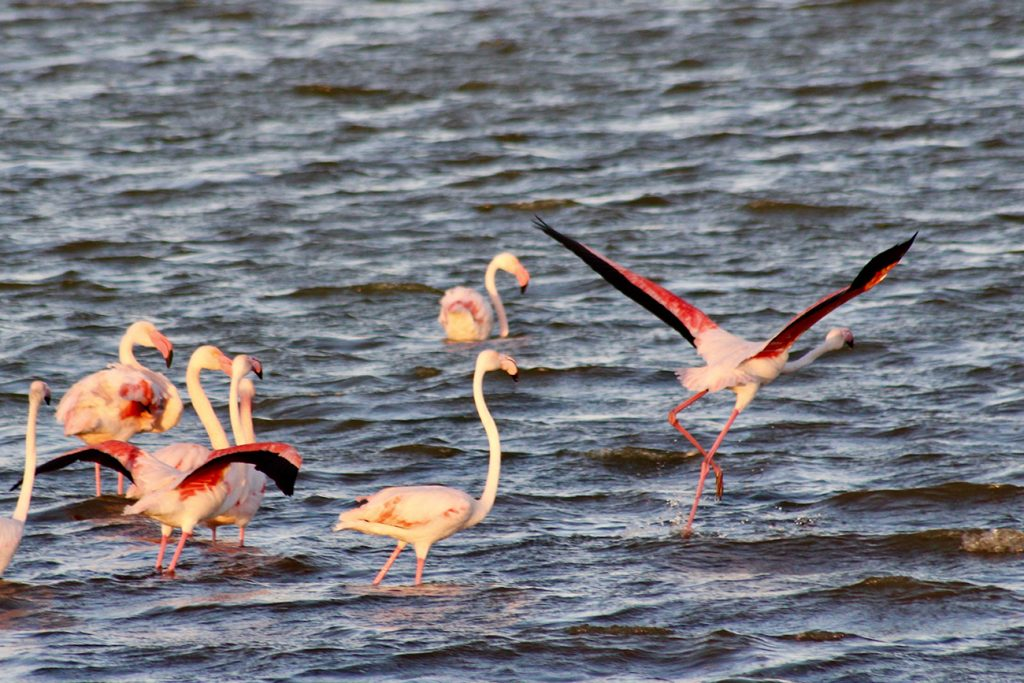 flament rose qui prend son envol