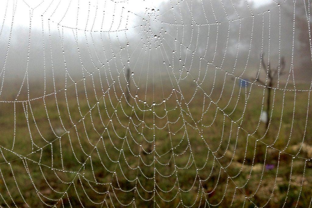 toile d'araignée avec la rosée du matin