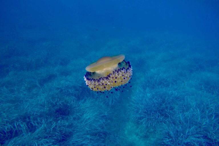 meduse sous l'eau